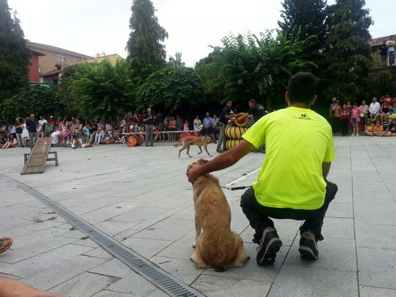 exhibición canina