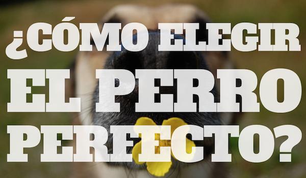 800 Tipos de perros, ¡Elige el perfecto!
