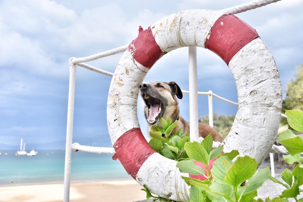 perro flotador