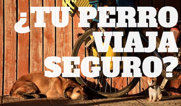 ¿Tu perro viaja seguro?